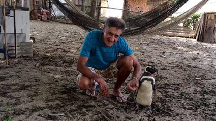 Penguin Swims 8000km Every Year To See Man Who Nursed It Back To Health