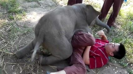 These Baby Elephants Think They're Lap Dogs