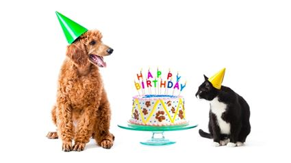 Find Out How Common Your Birthday Is In NZ!