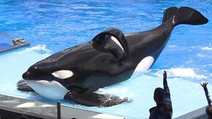 SeaWorld Ending Orca Shows