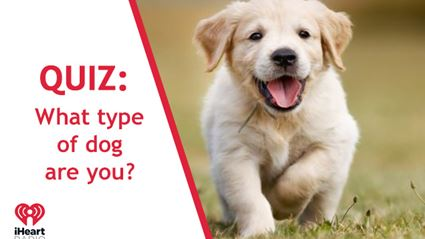 Quiz: What breed of dog are you?